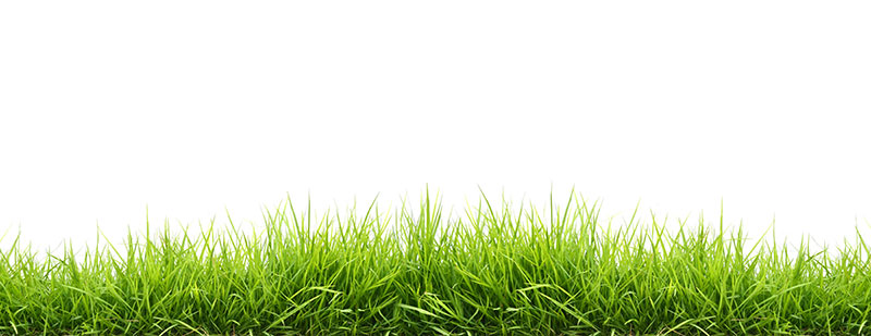 Grass Stock Image from Adobe Stock